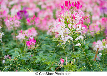 beautiful flowers in outdoor horizontal composition