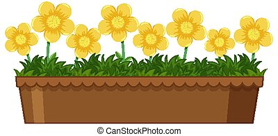 Beautiful flowers in pot on white background