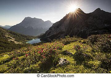beautiful flowers in summer Alps