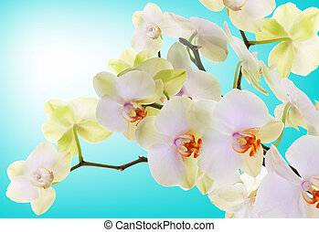 Beautiful flowers Japanese Orchid. Beauty. Flora