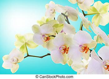 Beautiful flowers Japanese Orchid. Beauty. Flora