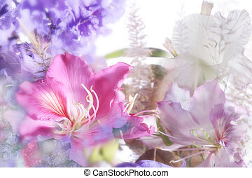 beautiful flowers made with soft focus
