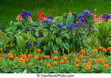 beautiful flowers of various coloring on the green flower-pleasing flower bed