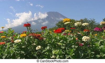 beautiful flowers on a background of Mount Fuji in Japan