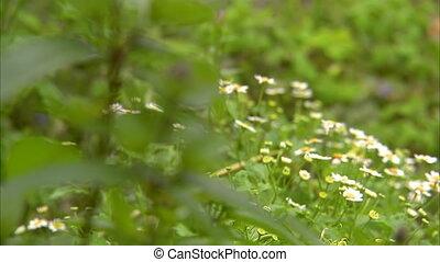 Beautiful flowers on a field