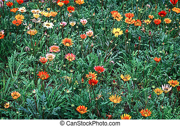 Beautiful flowers on a flower bed in the garden.