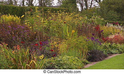 Beautiful flowers on a garden