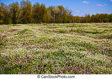 beautiful flowers on a meadow in spring forest