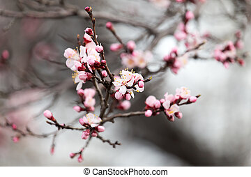 beautiful flowers on a tree in spring