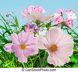 Beautiful flowers on abstract  summer nature background