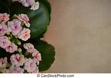 Beautiful flowers on brown background vintage