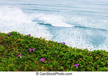 beautiful flowers on the shore