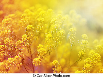 beautiful flowers - beautiful flowers on abstract background...