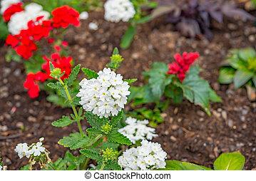 beautiful flowersin the field