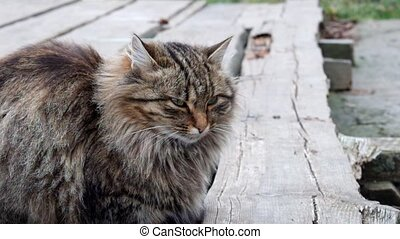 Beautiful fluffy cat sitting on a wooden bridge and looks...