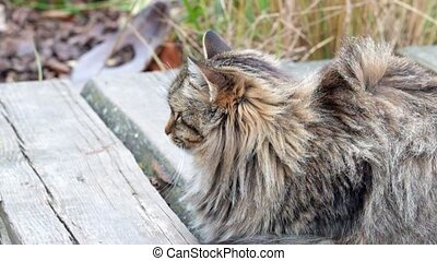 Beautiful fluffy cat sitting on a wooden bridge under a...