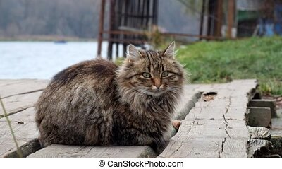 Beautiful fluffy cat sitting on the river bank