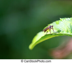 Beautiful fly sitting on a plant