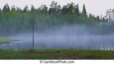 Beautiful foggy lake in lush finnish forest in the morning -...