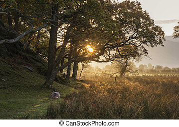 Beautiful foggy misty Autumn sunrise over countryside surrounding Crummock Water in Lake District in England