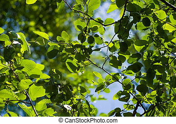 Beautiful Foliage Background