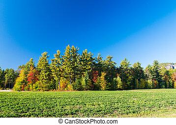 Beautiful foliage colors of New England
