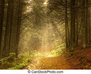 beautiful forest and sunbeams