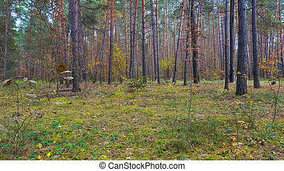 Beautiful forest at autumn day.