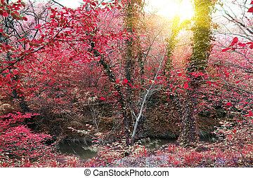 beautiful forest at sunrise