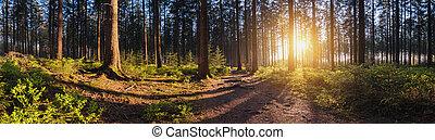 beautiful forest at sunset panroama - Bright sunlight shines...