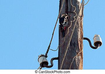 forest bird woodpecker