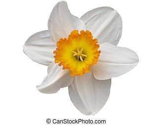 Beautiful forest flower