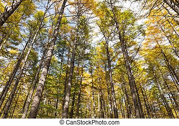 Beautiful forest in Autumn season