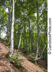 Beautiful forest in the Carpathian mountains