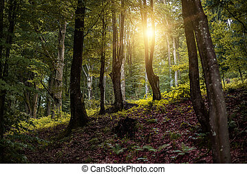 Beautiful forest in the rays of the sun.