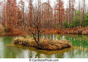 Beautiful forest lake in the autumn day