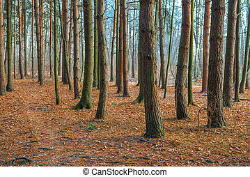 beautiful forest landscape in late autumn