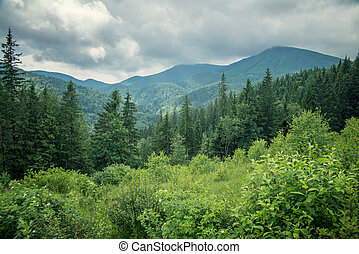 landscape in the Carpathian mountains