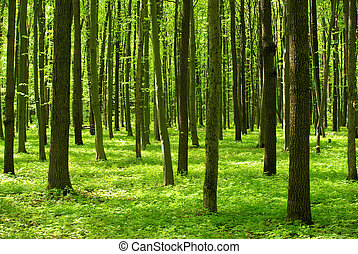 forest - beautiful forest landscape in the morning