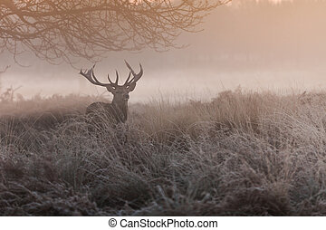 red deer - Beautiful forest landscape with beautiful red...
