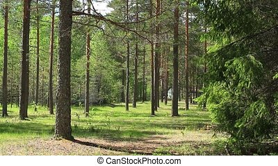 Beautiful forest loop ready file - Beautiful forest, air...
