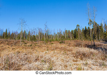 Beautiful forest meadow at fresh sunny day