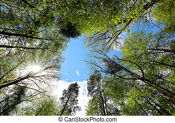 Beautiful forest of blue sky