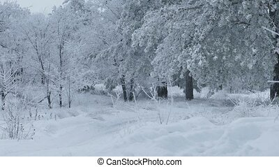 beautiful forest of trees the snow nature winter christmas -...