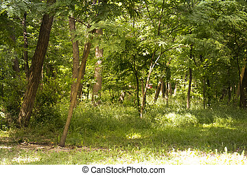 beautiful forest on a sunny day