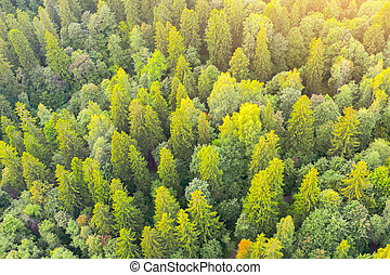 Beautiful forest scene in autumn with green and yellow foliage, aerial view.