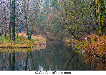 beautiful forest scenery with a water reflecting the forest, the woods of europe during autumn season