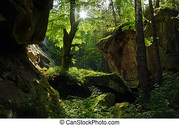 Beautiful forest - Sunny day. Beautiful fairy forest....