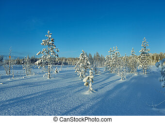 Beautiful forest with trees covered by snow