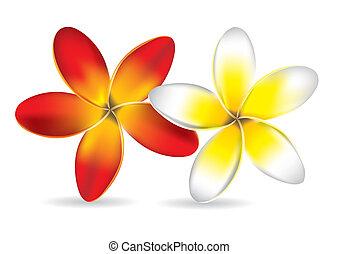 Beautiful Frangipani Flowers - Vector Illustration